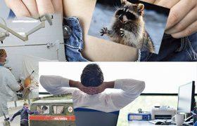 Новый законопроект о наказании за нападение на медика и немного енотов