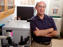 Микросферы делают гонорею беззащитной перед лицом иммунитета