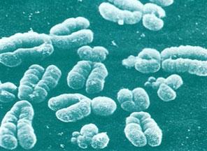Ученым удалось определить подробную химическую структуру вируса P22