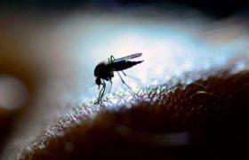 Желтая лихорадка грозит стать новым вирусом Зика