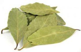 Этот лист улучшает циркуляцию крови, является мочегонным, антисептиком и антибиотиком