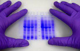 Раскрыт секрет стафилококковой инфекции