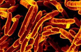Выяснен механизм отравления организма туберкулезной палочкой