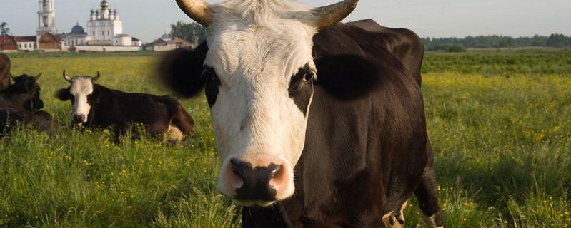 Почему красное мясо и молоко вызывают рак: объясняет нобелевский лауреат