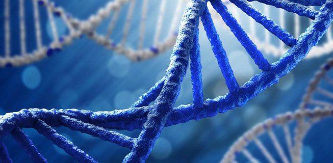 Собранные вручную синтетические ДНК человека появятся через пять лет