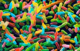 Как приручить микроба