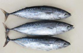 В США обнаружили замороженный тунец, инфицированный гепатитом А