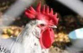 Франция подтвердила вспышку птичьего гриппа штамма H5N8