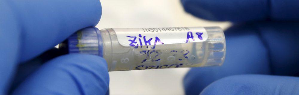 Вирус Зика: чем опасна страшная инфекция