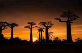 Мадагаскар борется с эпидемией чумы
