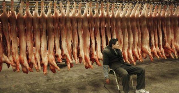 Отказ от мяса защитит от непобедимых бактерий