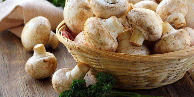 Обнаружены новые полезные свойства грибов