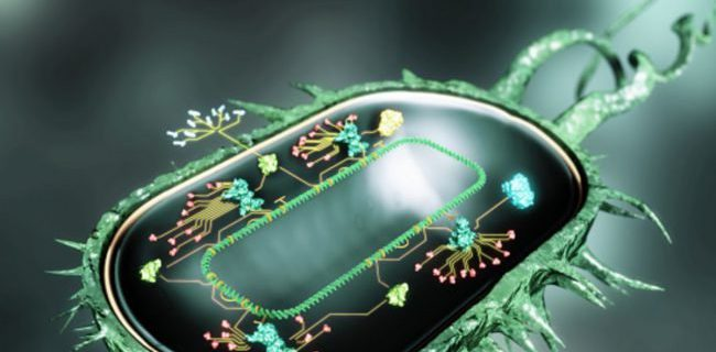 Лекарство для лечения рассеянного склероза может победить стойкие бактерии