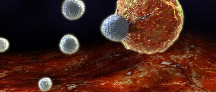 Как иммунные клетки убивают бактерии?