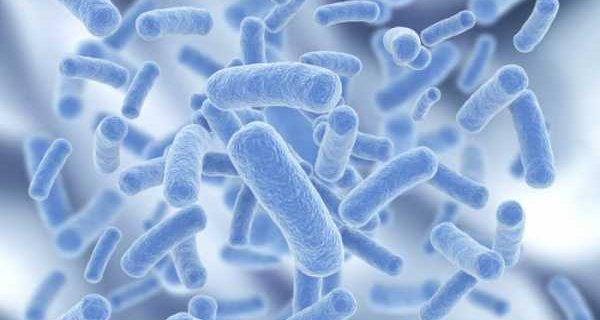 Влияние антибиотиков от кишечной палочки на продолжительность жизни