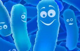 Лактобактерии могут защищать от вирусов гриппа?