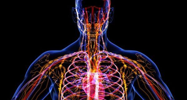 4 важных аспекта, которые нужно знать о лимфатической системе