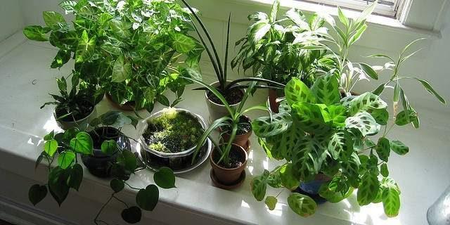 Осторожно, эти растения могут вызвать сильную аллергию
