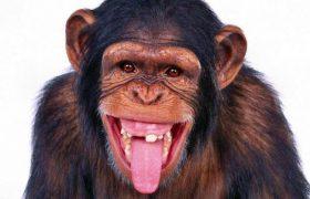 Ученые выяснили, как ВИЧ мог передаться от обезьян к человеку