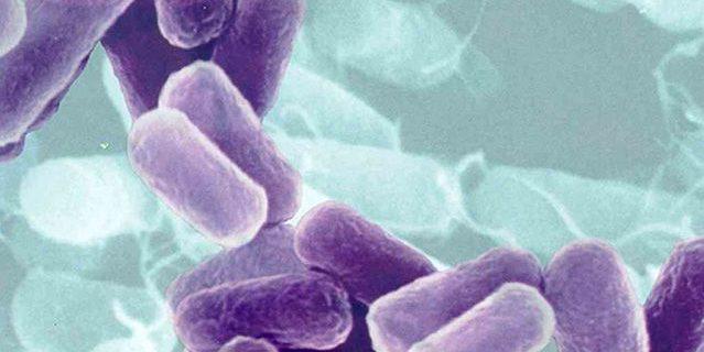 Причины возникновения, симптомы и лечение листериоза