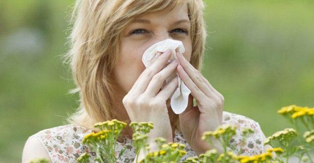Испытана вакцина против аллергии на пыльцу растений
