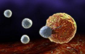 Новые фотографии иммунных клеток помогут ученым в исследовании рака и ВИЧ