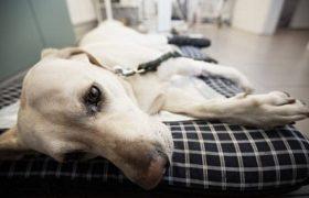 Можно ли заразиться гриппом от любимой собаки