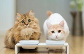 Золотые правила кошачьего питания