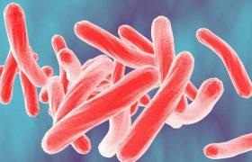 Разработан новый метод диагностики туберкулеза