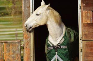 В Павловске введен карантин из-за вспышки опасной инфекции у лошадей