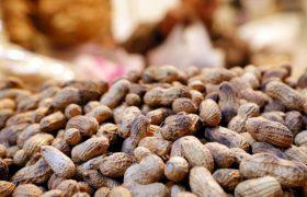Новая вакцина успешно подавила опасную аллергию на арахис