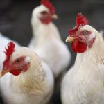 Комитет ветеринарии обращает внимание на меры профилактики гриппа птиц