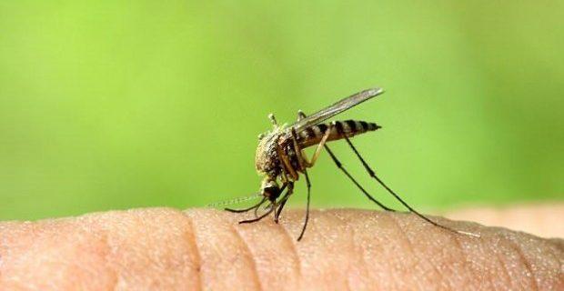 Препарат для лечения чесотки может сделать кровь ядовитой для комаров