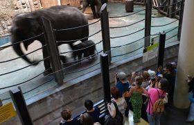 В ереванском зоопарке зафиксирована вспышка туберкулеза
