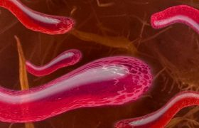 В лаборатория бактерии ведут себя иначе, нежели в теле человека