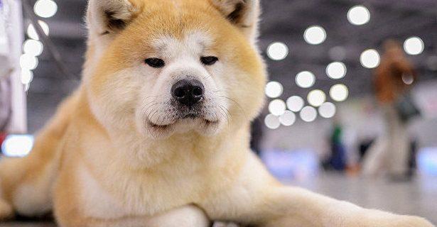 Собаки станут источником новых эпидемий гриппа, предупреждают ученые