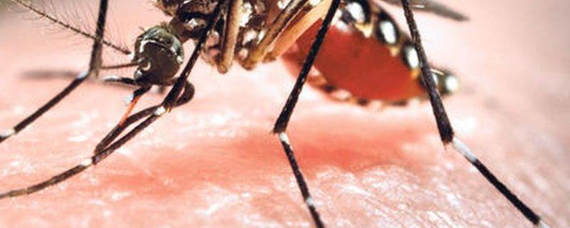 Каких людей чаще кусают комары