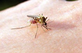Укусы насекомых: что делать, чтобы они не чесались