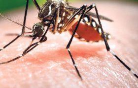Комары принесли в Россию смертоносные вирусы