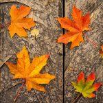 Проблемы со здоровьем, которых можно избежать осенью