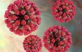 Вирус краснухи передается при зачатии через генный материал