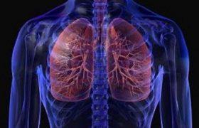 Лечение заболеваний бронхов и легких с помощью фенхеля: 12 рецептов