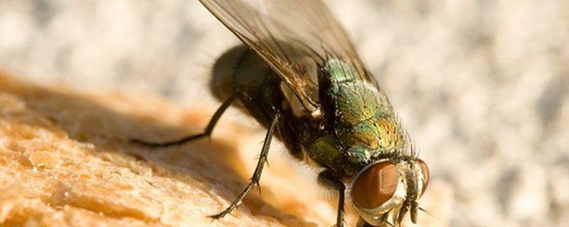 Предсказаны размножение мух и эпидемии инфекций