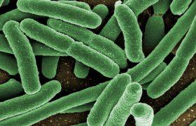 Полезные бактерии в пробиотиках могут превратиться в угрозу для здоровья