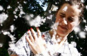Врачи-аллергологи дали рекомендации по защите от тополиного пуха и пыльцы