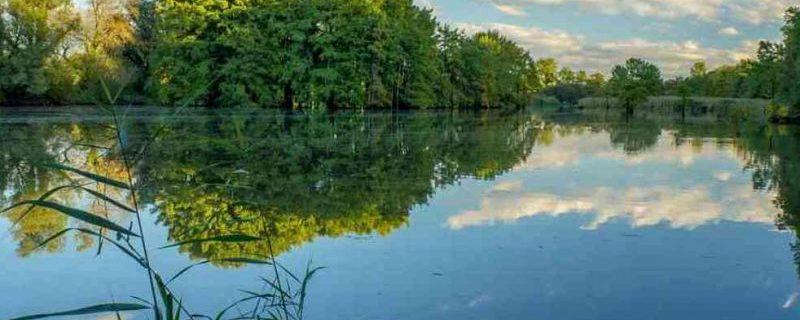 Мировые реки заражены антибиотиками