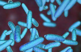 Найден компонент, уничтожающий резистентные бактерии