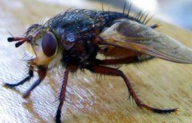Больничные насекомые способствуют распространению супербактерий
