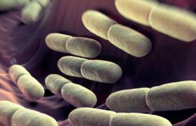 PLOS Genetics: молочнокислые бактерии эффективно укрепляют иммунитет