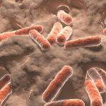5 продуктов, увеличивающих число «хороших» бактерий